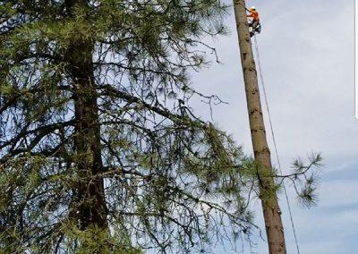 Five Star Tree Service